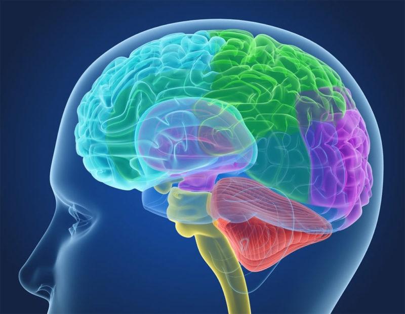 Ухудшает мозговую деятельность