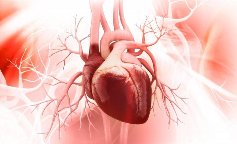 Вызывает кардиопаталогии